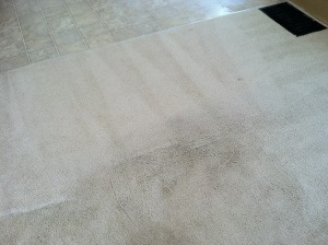 professional carpet cleaning auburn al